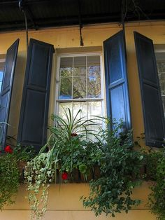 window box. Love the shutters and the window box!! So quaint!