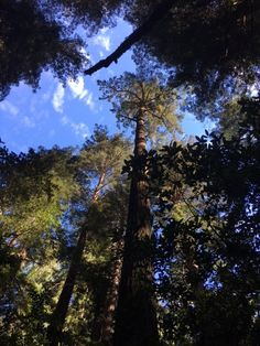 Take a break (virtually) in the redwoods! Check out these lovely shots taken by #EmilyBurns, our Director of Science, at @Samuel P. Taylor State Park.