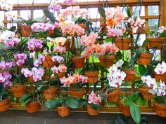 Wall of orchids at the Atlanta Botanical Garden