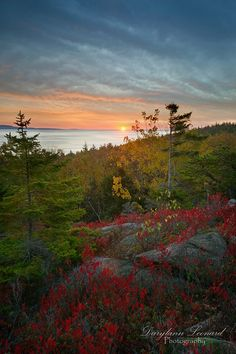 It's a beautiful start to the week in #Maine. Here is a sunrise captured in Acadia National Park. Have you visited this national treasure this Fall? Photo by Darylann Leonard Photography