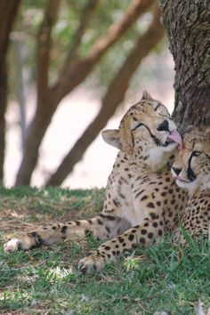 """""""Mom, you're messing up my spots!"""" (photo: Lisa Diaz)"""