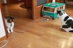 里親さんブログ監視付きだけど - http://iyaiya.jp/cat/archives/74626
