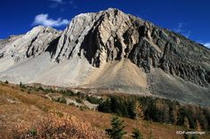 Fall colors, Ptarmigan Meadows, Kananaskis Country