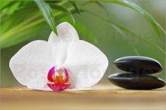 Tanja Riedel - Weiße Orchidee Wellness Steine