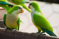 Unknown perpetrators stole 50 parrots from the Municipal Garden of Chania!