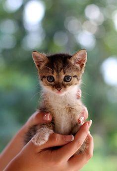 cute kitten..