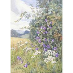 Margaret Tarrant - Nettle-Leaved Bellflower and Yarrow