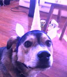 Dog Unicorn Horn Headband  Pick your color  Terry by jumbojibbles, $15.00 -- Aw! XD Now for doggies too!