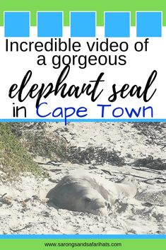 Tips and advice to help you with the best safari in Southern Africa and to end off with a few. South Africa Beach, Cape Town South Africa, Anti Nausea Medication, Africa People, Elephant Seal, Safari Hat, Travel Companies, Travel Articles, African Animals