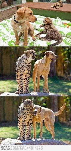 Best Friend Forever ! I need a cheetah for Honey...and ME!!