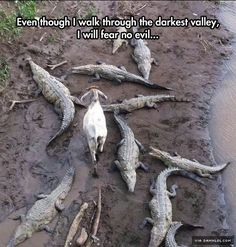 Courageous Goat