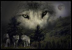 Quadro de lobos com floresta ao fundo