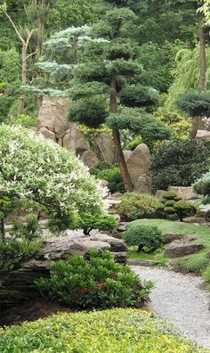 Garden Inspiration, Garden Ideas, Cloud Pruning, Tea Gardens, Garden Waterfall, Wonderful Flowers, Maple Tree, Japanese Maple, Japanese Gardens