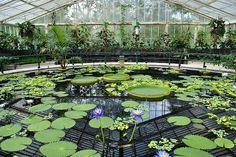Royal Botanic Gardens (Kew, London)