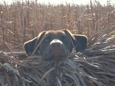 Waitin on the birds  #Waterfowl #Hunting