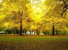 Portland, Oregon | Laurelhurst Park - Portland - Reviews of Laurelhurst Park ...