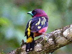 Post  #: Hoje (05/10) é o Dia Nacional das Aves.