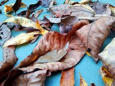 Leaves on blue Mantle Art, View Image, Autumn Leaves, Fall, Blue, Photography, Fall Leaves, Autumn, Fotografie