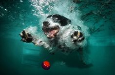 Underwater Dogs by Seth Casteel http://puppy-separation-anxiety.com/puppy-separation-anxiety-blog/books-about-dogs-underwater-dogs/