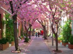 """""""Jessup Street"""" - this is the prettiest block in Washington Square West during the high bloom season which is usually the first week in April. Townhouse Exterior, Casa Anime, Historic Philadelphia, South Philly, Washington Square, Washington Dc, Beautiful Streets, Cool Photos, Amazing Photos"""