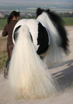 Красивые Лошади, Лошадиная Грива, Цыганская Лошадь, Тяжеловозы, None, Лошади, Животные, Любовь Лошадей, Люди