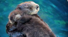 The Virginia Aquarium celebrated a very special birthday on Sunday!