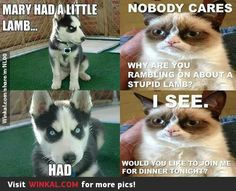 Grumpy Cat And Evil Dog He Made Smile