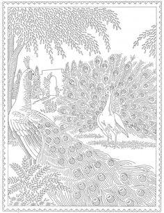 Laura-Wheeler-Transfer-683-Peacocks