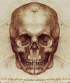 New Tattoo Idea - Leonardo Da Vinci Skull drawing Skull Anatomy, Anatomy Art, Skeleton Anatomy, Male Figure Drawing, Figure Drawing Reference, Michelangelo, Skull Sketch, Skull Drawings, Human Head