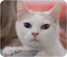 tHIS IS dOROTHY SHE IS LOOKING FOR A HOM E in Cookeville, TN has multi-colored eyes, what a beauty