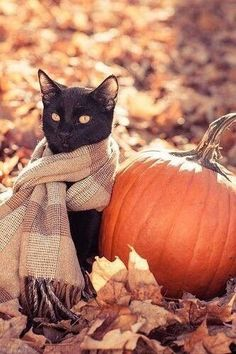 Black Cat Wearing A Scarf Sitting By A Pumpkin in the Autumn Leaves - Tiere - Katzen Crazy Cat Lady, Crazy Cats, I Love Cats, Cute Cats, Adorable Kittens, Gatos Cats, Photo Chat, Autumn Aesthetic, Black Cat Aesthetic