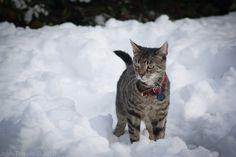 Snow Leopard by Retro-Dreaming.deviantart.com on @deviantART