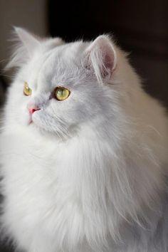 Mi gatito Fendi