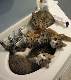 Comment faire rentrer cinq chats dans un lavabo !..