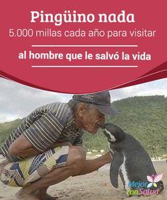Pingüino nada 5.000 millas cada año para visitar al hombre que le salvó la vida  En muchas ocasiones hemos tenido la oportunidad de conocer historias que nos demuestran cuán estrecha es la relación sentimental que tienen muchos seres humanos con los animales.