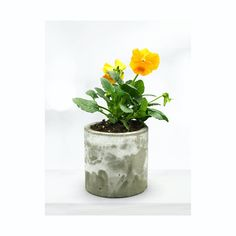 AURA - Raw Collection | Medium Planter | Handcrafted Gift | CactusSucculent Pots | Concrete Creation | Minimalist | Rustique Big House Plants, Handmade Market, Large Planters, Concrete Planters, Bank Holiday, Big Houses, All You Need Is Love, Sculptures, Minimalist
