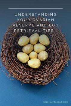 Understanding Your Ovarian Reserve & The Egg Retrieval Process, with ORM Fertility. #fertility #fertilitysupport #ttc #ivf #tips