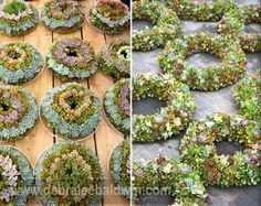 How to Make a Succulent Wreath- Debra Lee Baldwin