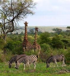 Kruger National Park , South Africa