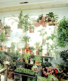 Ladder on the ceiling for hanging plants. Very neat idea! I am sure you could use a tension rod for smaller spaces.