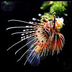 The Fish by Regina J., via Flickr