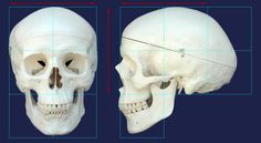 Résultats Google Recherche d'images correspondant à http://www.characterink.com/wp-content/uploads/2010/09/skull_Diagram.jpg