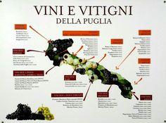 Vini e vitigni della Puglia