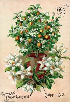 1896 Cottage Rose Garden catalog