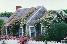 Llove the way they have put trellises on their roof to encourage the roses to grow up and over it! Such a romantic storybook cottage! Or MIL cottage. Or tiny house. Garden Cottage, Rose Cottage, White Cottage, Cabins And Cottages, Beach Cottages, Cottage Living, Cottage Homes, Beach Cottage Style, Nantucket Cottage