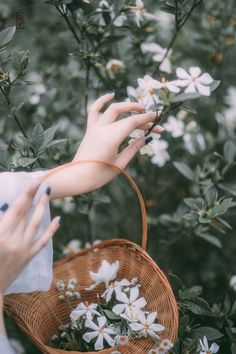 My Positive Style Hand Pictures, Girly Pictures, Beautiful Pictures, Hand Photography, Spring Photography, Flower Aesthetic, Aesthetic Girl, Love Flowers, Beautiful Flowers
