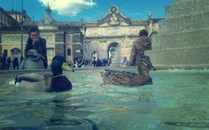 Tutti pazzi per Roma! In visita alla città arrivano anche due germani reali! #germani #reali #piazza #del #popolo #fontana