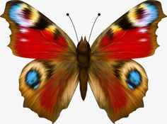 Butterfly painting - Click the picture to see the actual size – Butterfly painting Butterfly Artwork, Dragonfly Art, Butterfly Pictures, Butterfly Painting, Butterfly Wallpaper, Float Like A Butterfly, Butterfly Baby, Glass Butterfly, Butterfly Eyes