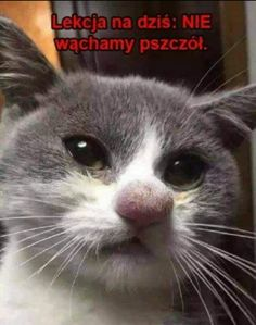 Polish Memes, Pray For Peace, Wtf Funny, Animal Memes, Animals And Pets, Haha, Dog Cat, Jokes, Entertaining