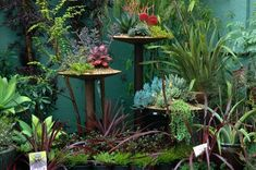 Succulent Gardens on pedestals.   J. Peterson Garden Design - Austin, Tx - I really love the way this looks, colored background, plants on pedestals filling in gaps and adding height - great design concept! **************************************** (repin) #indoor #plant #display